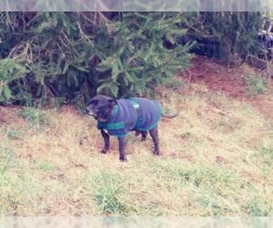 Mutt Dogs for adoption in Monterey, VA, USA