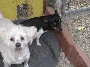 Mutt Dog For Adoption in Sherman Oaks, CA, USA