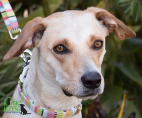 Mutt Dog For Adoption in savannah, GA, USA