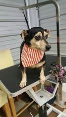 Mutt Dog For Adoption in Columbia, TN