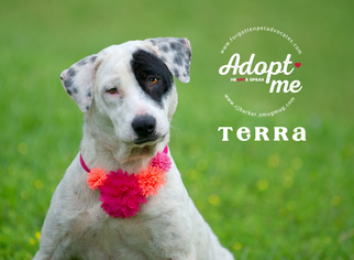 Dalmatian Mix Dog For Adoption in Pearland, TX, USA