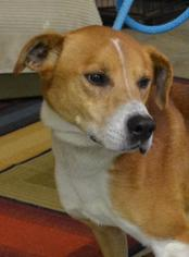 Mutt Dog For Adoption in Trenton, MO
