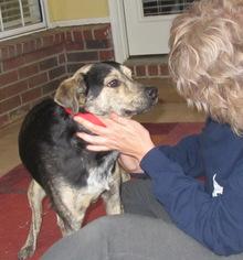 Mutt Dog For Adoption in Nesbit, MS