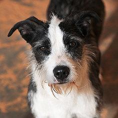 Basset Hound Mix Dog For Adoption in Kanab, UT