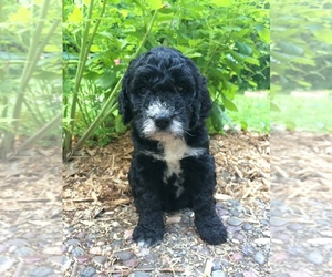 Puppies for Sale near Mount Horeb, Wisconsin, USA, Page 1 (10 per