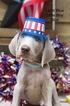 Weimaraner Puppy For Sale in SEVIERVILLE, TN, USA