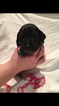 German Shorthaired Pointer Puppy For Sale in GEORGETOWN, KY, USA