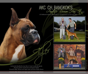 Boxer Litter for sale in CHILHOWEE, MO, USA
