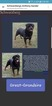 Rottweiler Puppy For Sale in EXCELLO, MO, USA
