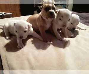 Bullypit Litter for sale in CLAYTON, NM, USA
