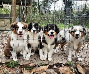 Puppies For Sale Near Utica New York Usa Page 1 10 Per Page