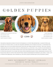 Golden Retriever Puppy For Sale in NILAND, CA, USA