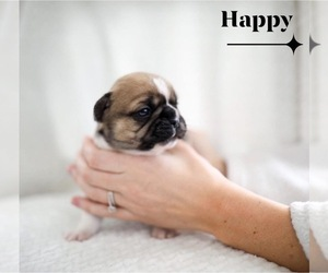 French Bulldog Litter for sale in LAKE VILLAGE, IN, USA