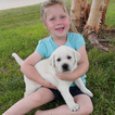 Labrador Retriever Puppy For Sale in VALLEY CENTER, KS, USA
