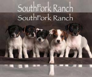 Jack Russell Terrier Litter for sale in PEABODY, KS, USA