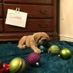 Mastiff Puppy For Sale in CORAOPOLIS, PA, USA