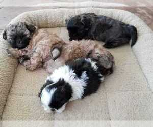 Puppies For Sale Near Tupelo Mississippi Usa Page 1 10 Per