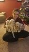 Labradoodle Puppy For Sale in ASHWAUBENON, WI, USA