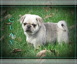 Pug-Puggle Mix Litter for sale in BULLTOWN, PA, USA
