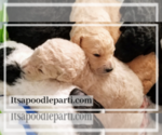 Poodle (Standard) Puppy For Sale in COVINGTON, GA, USA