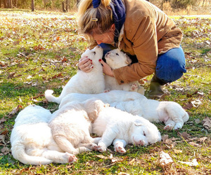 Golden Pyrenees Litter for sale in ELLENBORO, NC, USA