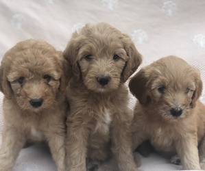 Puppies For Sale Near Lumberville Pennsylvania Usa Page 1