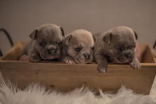 Puppies For Sale Near Wilmington North Carolina Usa Page 1 10
