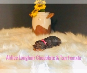 Dachshund Litter for sale in CHILLICOTHE, OH, USA