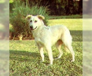 Small #1 Breed Aidi image