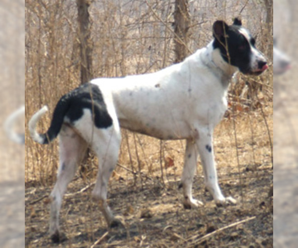 Image of Cypro Kukur Breed
