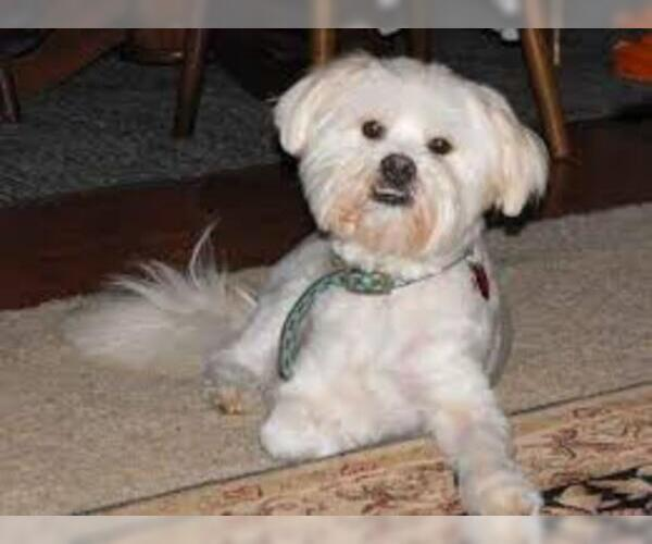 Medium Photo #3 Kimola Dog Breed