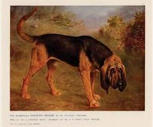 Small #3 Breed Bloodhound image