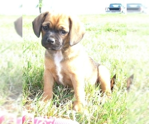 Small Photo #1 Bassugg Dog Breed