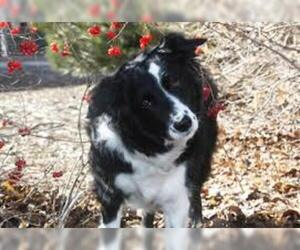 Small #2 Breed Border Collie image