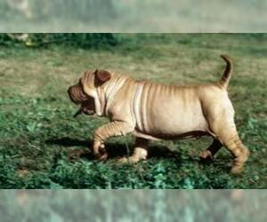 Small #3 Breed Ba-Shar image