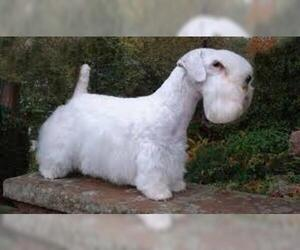 Small #5 Breed Sealyham Terrier image