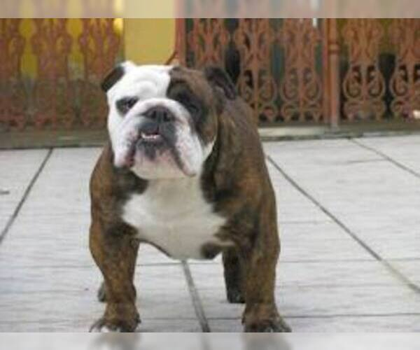 847e402467cb8f6e_FrenchBulldog2.jpg