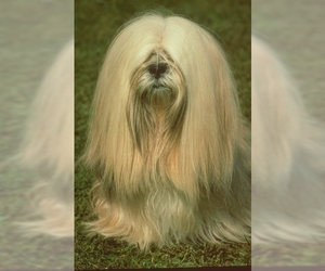 Image of breed Lhasa Apso