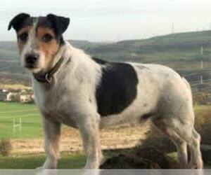 Small #1 Breed Parson Russell Terrier image