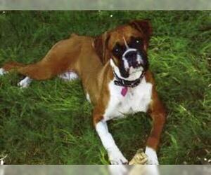 Small #3 Breed Boxer image
