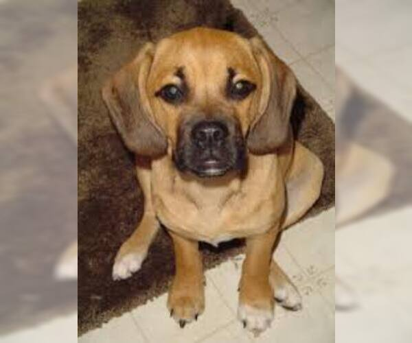 Medium Photo #4 Bassugg Dog Breed