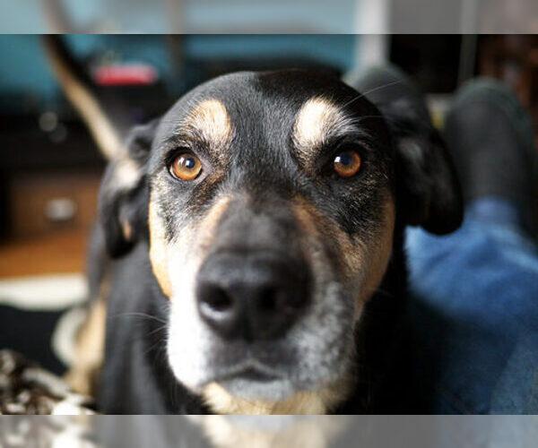 Medium Photo #2 Mutt Dog Breed