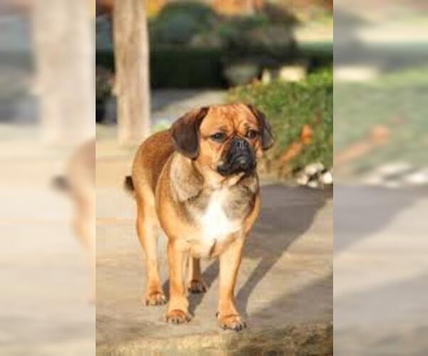 Medium Photo #3 Bassugg Dog Breed