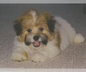 Small #1 Breed Kimola image