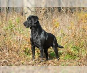 Small #6 Breed Labrador Retriever image