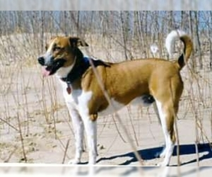 Image of breed Arubian Cunucu Dog