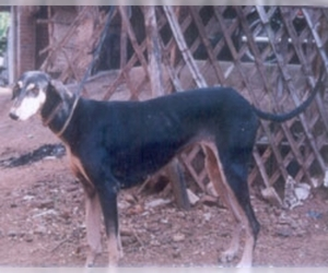 Image of Kanni breed