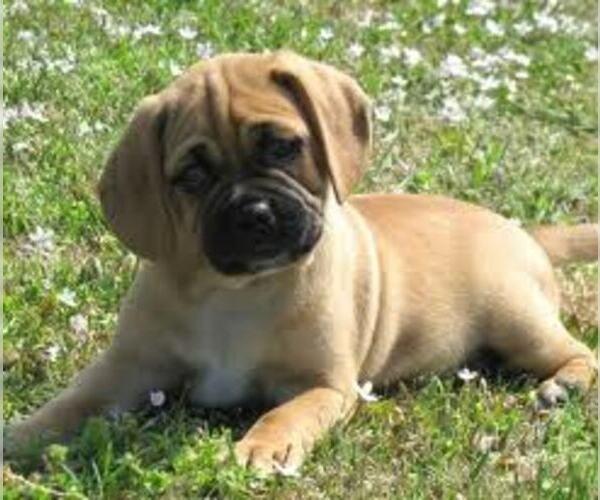 Medium Photo #6 Bassugg Dog Breed