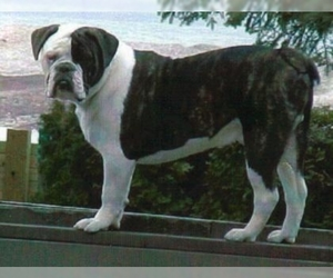 Larson Lakeview Bulldogge