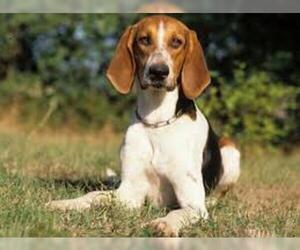 Small #2 Breed Beagle image